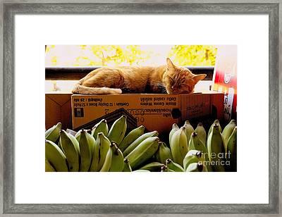 Cat Nap Framed Print by Dean Harte