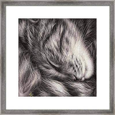 Cat Nap Framed Print by Elena Kolotusha