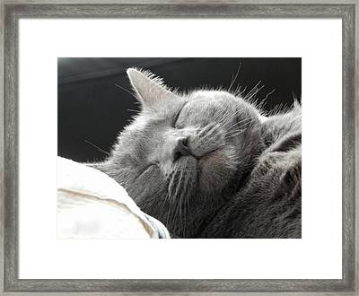 Cat Nap Framed Print by Karen Cook