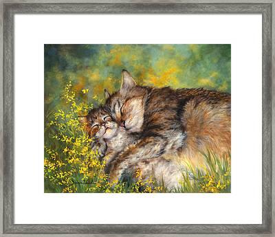 Cat Nappin' Framed Print