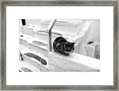 Cat Napping Mono Framed Print