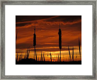Cat Nine Tails Sunset Framed Print by Donnie Freeman
