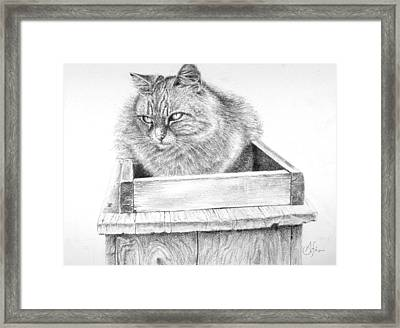 Cat On A Box Framed Print