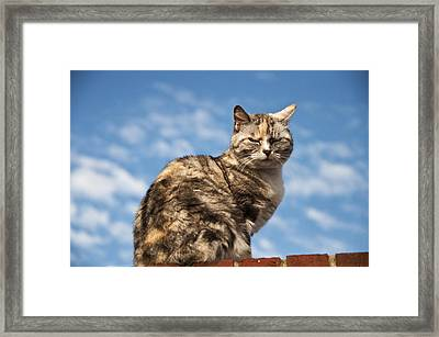 Cat On A Hot Brick Wall Framed Print by Steve Purnell
