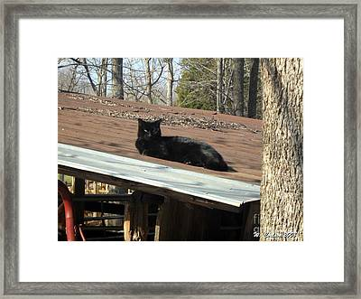 Cat On A Tin Roof Framed Print by Wendy Coulson