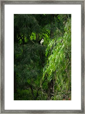 Cat On A Tree Framed Print by Marco Oliveira
