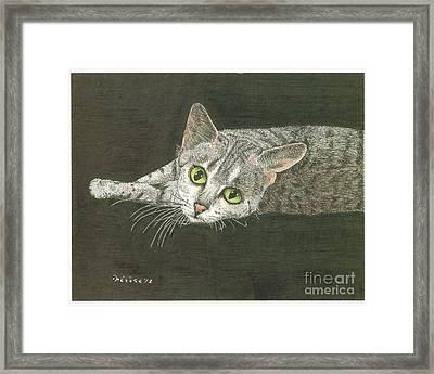 Cat On Black Framed Print by Bill Hubbard