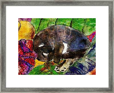 Cat On Clothes Framed Print