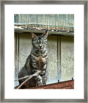 Cat On Roof Framed Print by Jocelyn Kahawai