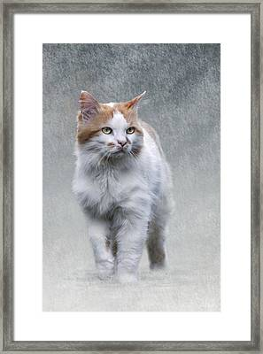 Cat On Texture - 01 Framed Print