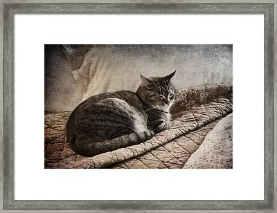 Cat On The Bed Framed Print