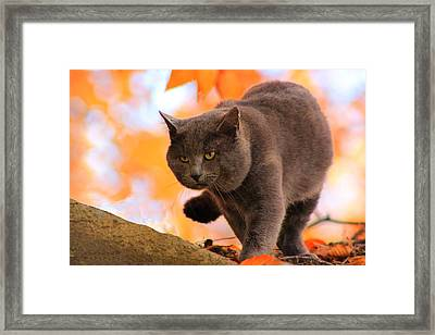 Cat On The Prowl Framed Print
