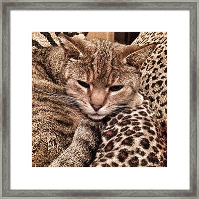 Cat Patterns Framed Print by Patricia Januszkiewicz