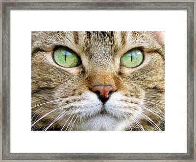 Cat Portrait 1 Framed Print