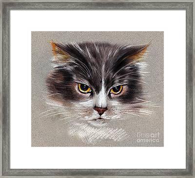 Cat Portrait Yellow Eyes Framed Print