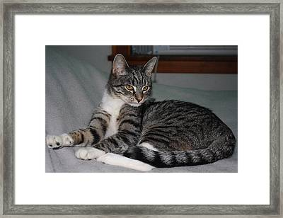 Cat Pride Framed Print by William Mathein