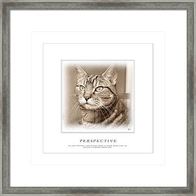 Cat Reflections 1 Framed Print