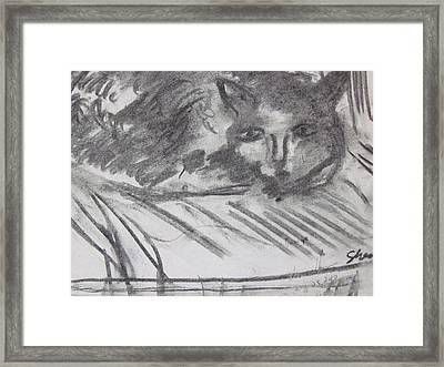 Cat Relaxing Framed Print