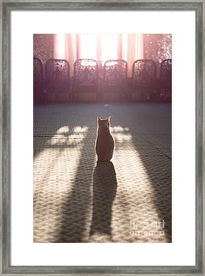 Cat Sitting Near Window Framed Print by Matteo Colombo