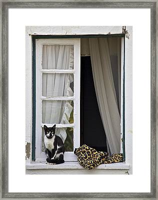 Cat Sitting On The Ledge Of An Open Wood Window Framed Print by David Letts