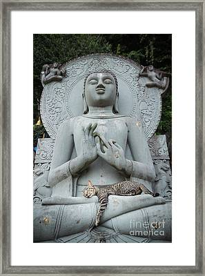 Cat Sleeping On The Lap Buddha Statues. Framed Print