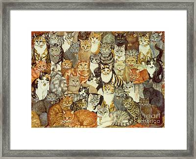 Cat Spread Framed Print by Ditz