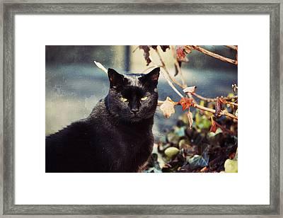 Cat Stevens Framed Print by Trish Tritz