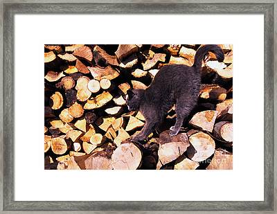 Cat Stretching On Firewood Framed Print by Thomas R Fletcher