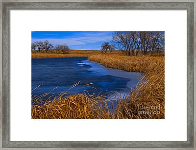 Cat Tails And Ice Framed Print
