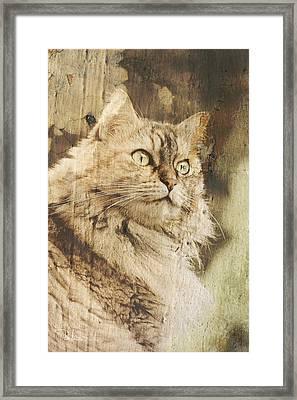 Cat Texture Portrait Framed Print