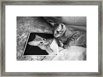 Cat Vanity Framed Print