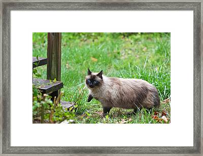 Cat Walking Framed Print