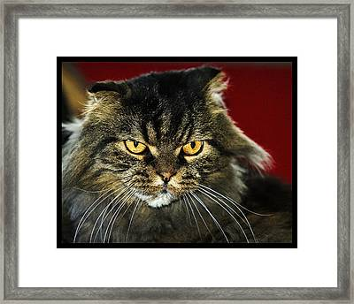 Cat With An Attitude Framed Print