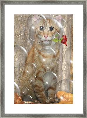 Cat With Bubbles Framed Print by Jo Collins