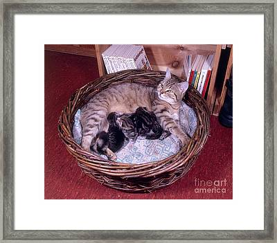 Cat With Kittens Framed Print