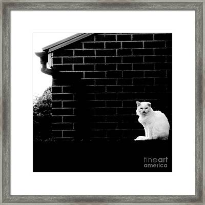 Cat With The Floppy Ear In Black And White Framed Print by Isabella F Abbie Shores FRSA