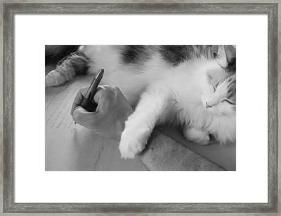 Cat Writer Framed Print by Daniel Kasztelan