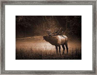 Cataloochee Bull Elk In Sepia Framed Print