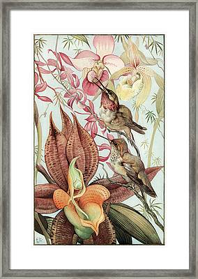 Catasetum And Cypridediums Framed Print by Edward Detmold