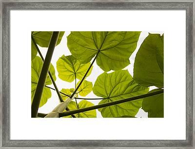Catawba Umbrella Framed Print