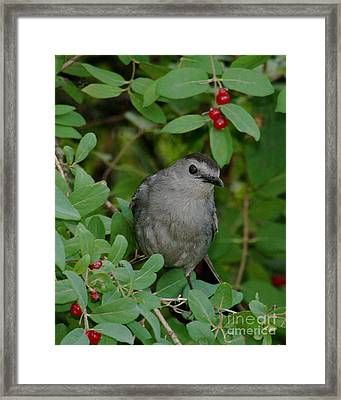 Framed Print featuring the photograph Catbirds Meow by Anita Oakley