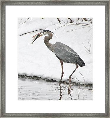Catch Of The Day 2 Framed Print
