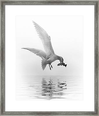 Catch Of The Day-2 Framed Print