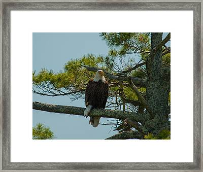 Catch Of The Day Framed Print by Brenda Jacobs