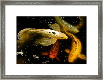 Catch Of The Day Framed Print by Ira Shander