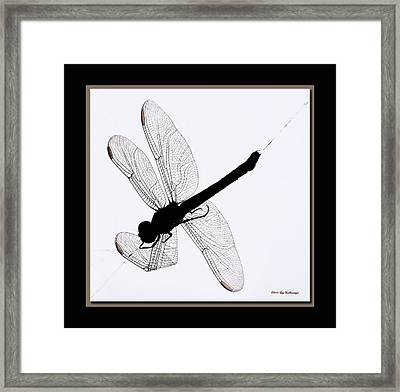 Catch Of The Day Framed Print by Lucy VanSwearingen