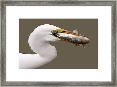 Catch Of The Day Framed Print by Paulette Thomas