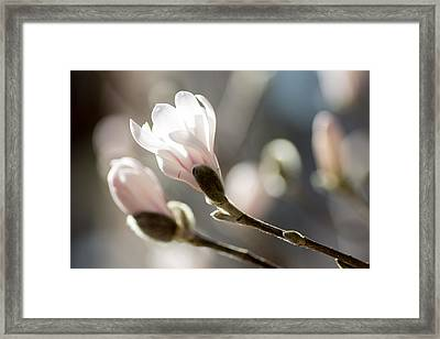 Catch Sun Framed Print by Marcel Huibers