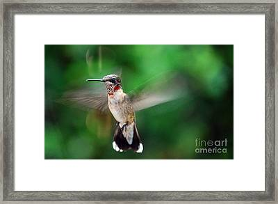 Catch The Buzz Framed Print by Skip Willits
