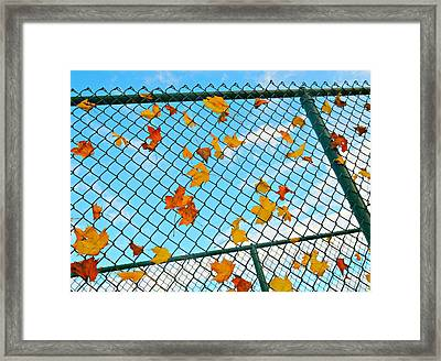 Catcher's Glove Framed Print by Diana Angstadt